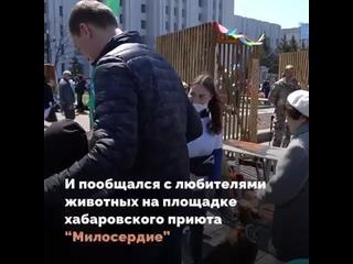 Приют для бездомных животных «Милосердие» на «АмурФесте» получил подарок от главы края — запас собачьего корма.