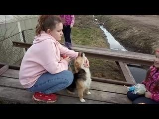 Собака воет)))