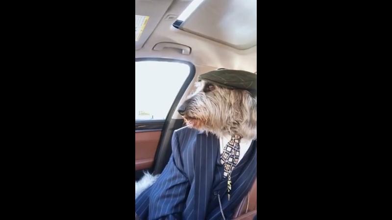 Видео от Натальи Логиновой