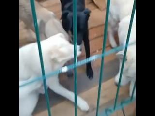 Video by Помощь животным п. Октябрьский (Люберецкий р-н)