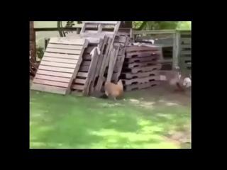 Если Вам скучно и грустно, то просто посмотрите это видео...