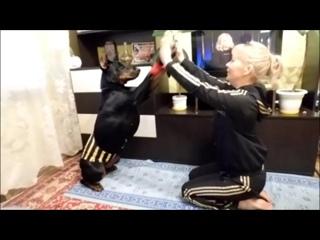 Синие. Анохина Татьяна и Вега. 2 осн.+доп.