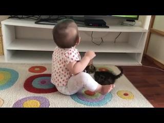 Котёнок пытается отвлечь ребёнка от мультиков