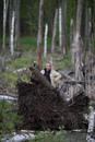 Персональный фотоальбом Стаса Астахова