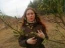 Фотоальбом Юлии Харавиной