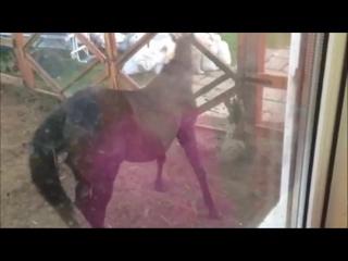 танцующий конь