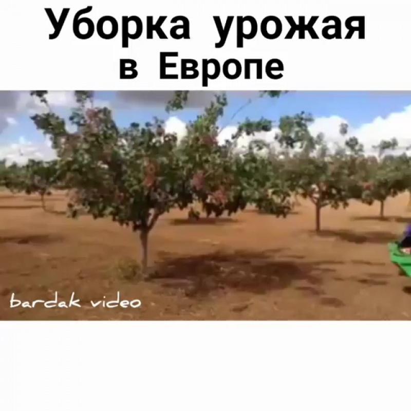 Уборка урожая в Европе...