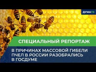 В причинах массовой гибели пчел в России разобрались в Госдуме
