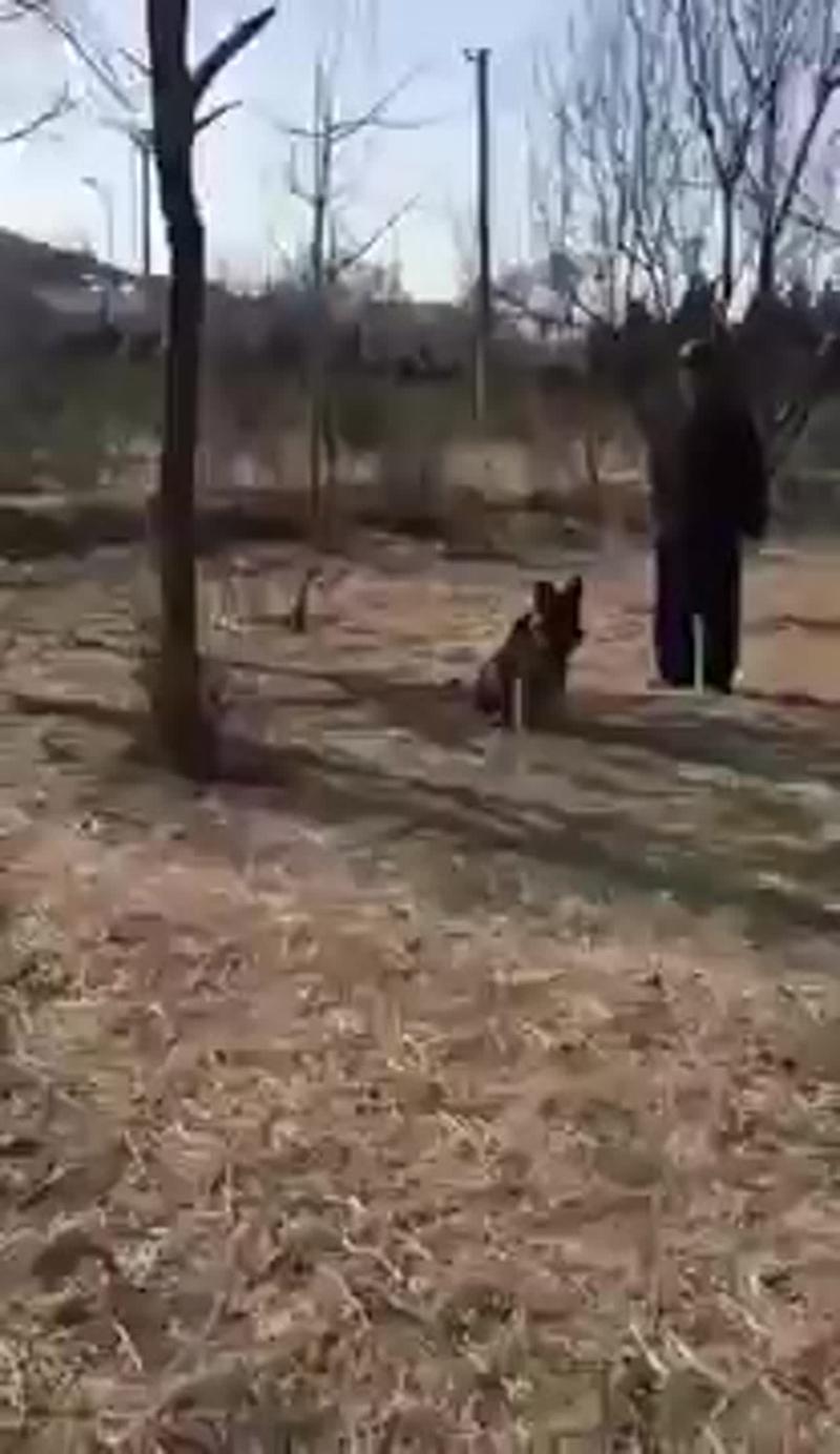 Банда комков шерсти напала на собакена