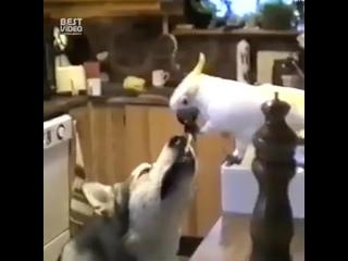 Иногда животные, намного человечнее самих людей byjulf ;bdjnyst, yfvyjuj xtkjdtxytt cfvb[  byjulf ;bdjnyst, yfvyjuj xtkjdtx