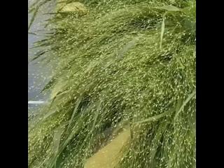Видео от Садовники Юги
