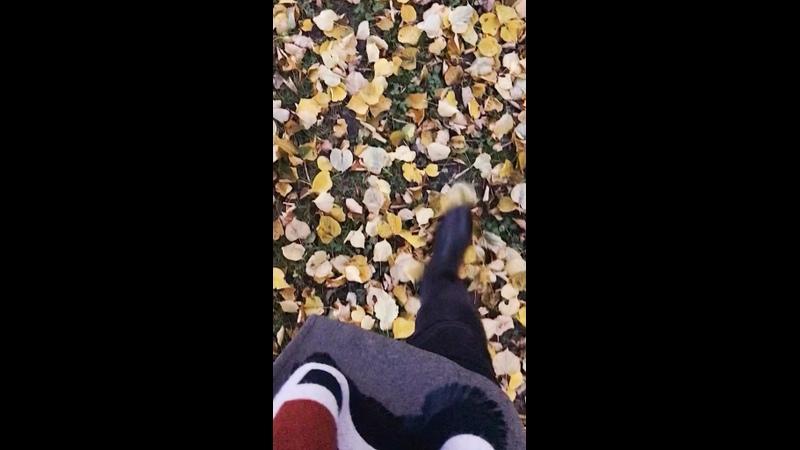 Видео от Маши Потаповой