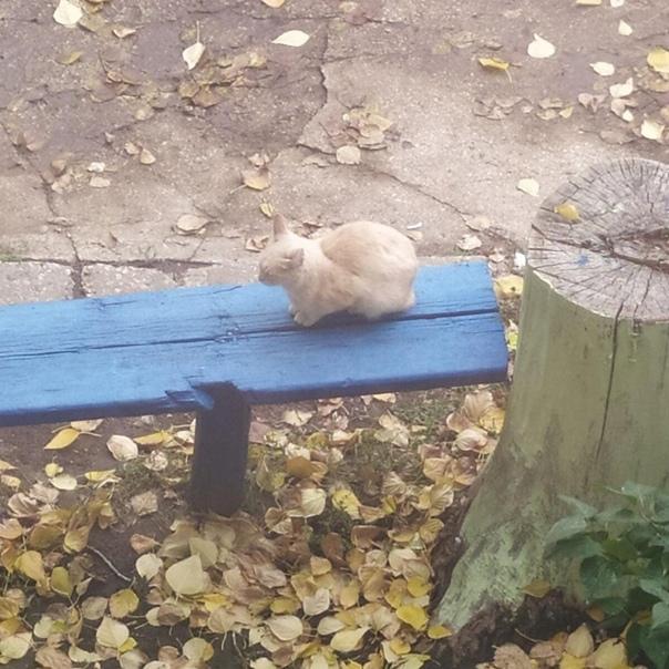 Кот живёт на улице Кутякова, около дома 68, около ...