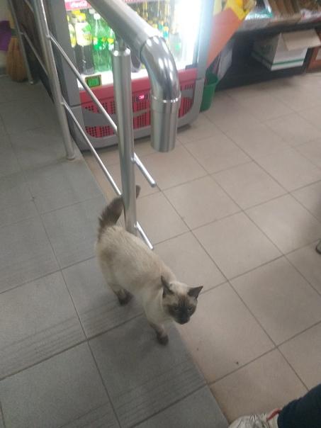 #потеряшка@sevas_92   Чей кот? Может кто-то ищет?