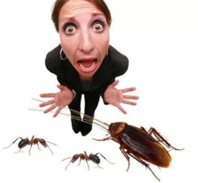 чем уничтожить тараканов в доме,