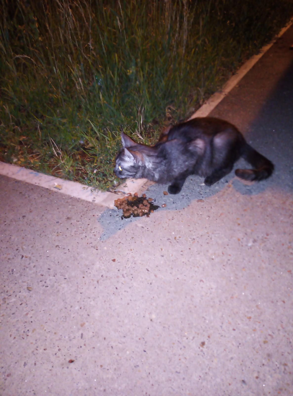Добрый вечер! ГЭС напротив гостиницы Татарстан кошка.