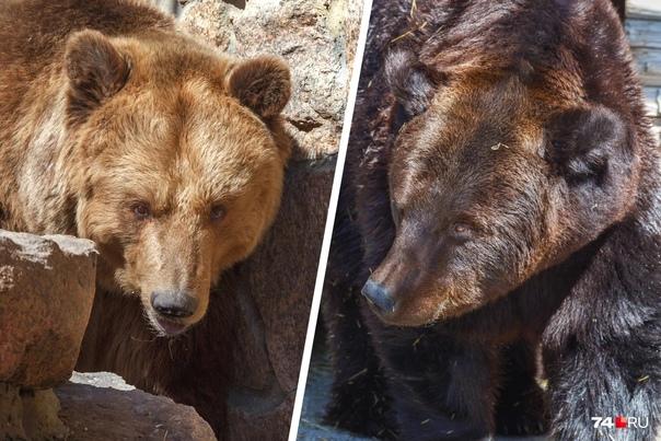 Возбуждено уголовное дело об отравлении медведей в...