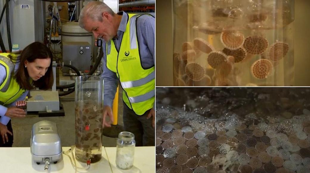 Ученые вырастили бактерию, которая питается сточными водами