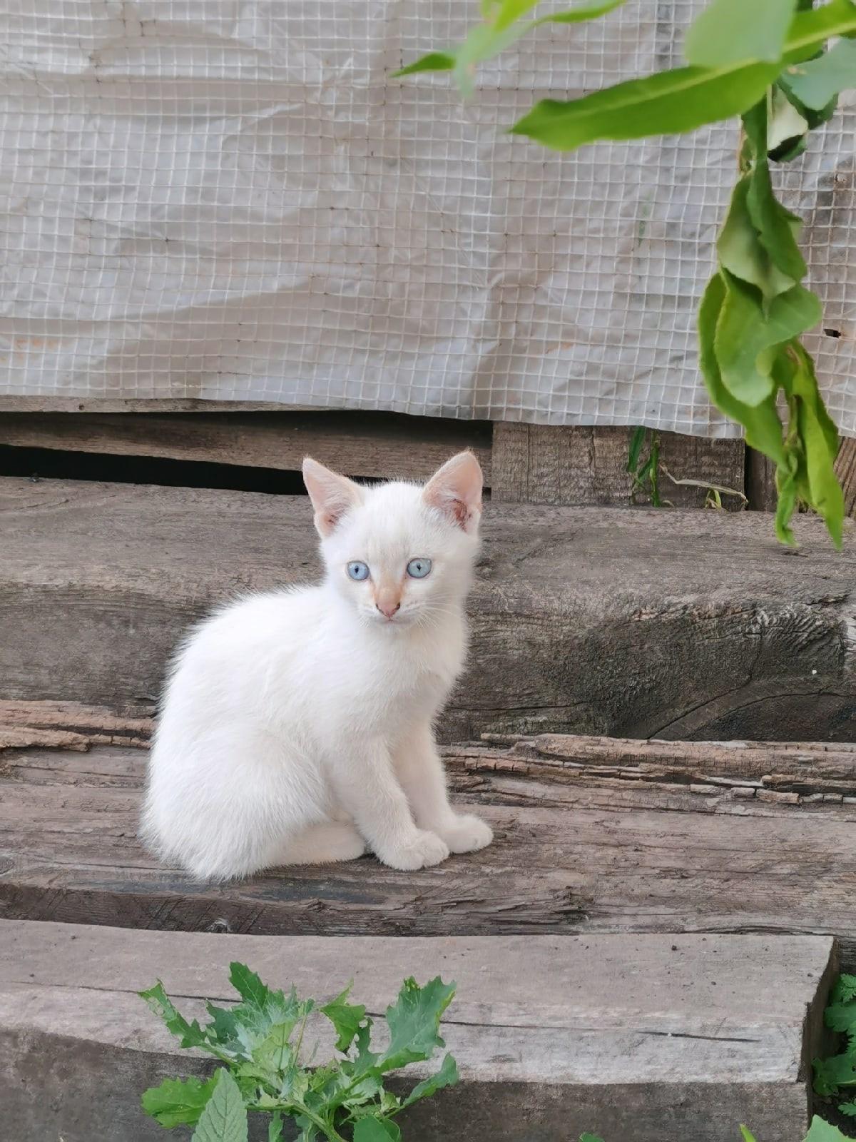 Ищем дом замечательным котятам, а так же