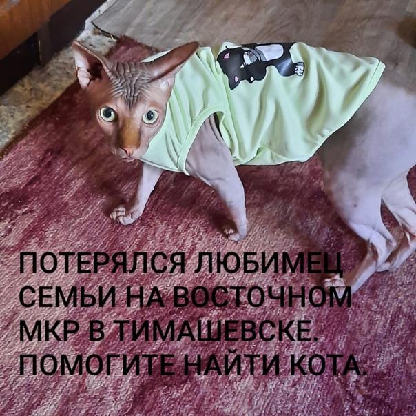 Здравствуйте пропал кот район восточный...