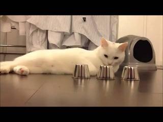 Кручу верчу, кота запутать хочу