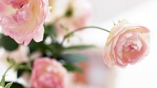 Весна в сопровождении Скрипки и Рояля Потрясающая музыка для Души. Красивейшая мелодия