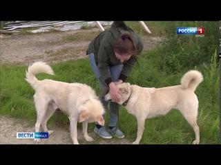 В Тазовском собака 2 недели была прикована к кресту: история спасения животного, брошенного людьми