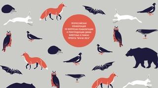 Конференция Центров реабилитации диких животных: НКО - зачем и как + Опыт ижевского волонтера, который еще 2 года назад видел птиц только в небе + Опыт летнего сезона 2020: наработки и результаты + Спасение птиц в ЮФО + Биосфера Балтики: результаты работы