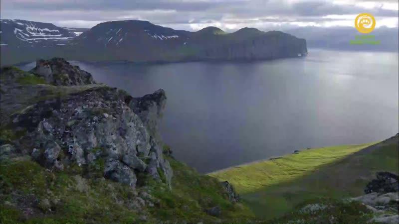 BBC Исландия Дикая жизнь