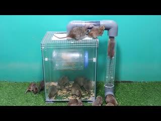 10_perangkap_tikus_paling_efektif_di_planet_ini__10_perangka