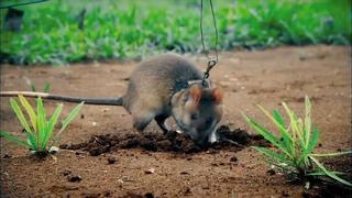 Очень умные животные, которых часто недооценивают!