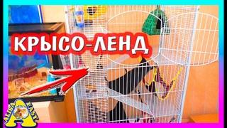 ЗООПОКУПКИ / ГЕНЕРАЛЬНАЯ уборка у КРЫС / КРЫСОЛЕНД / Alisa Easy Pets