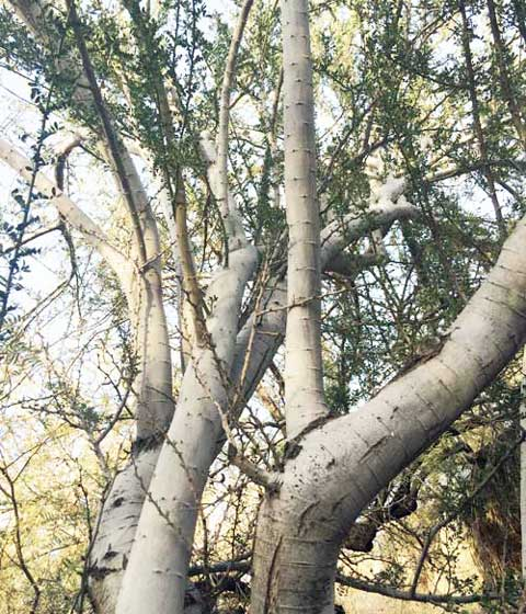 Из чего сделать рукоять для ножа: Дерево. Часть 1., изображение №9