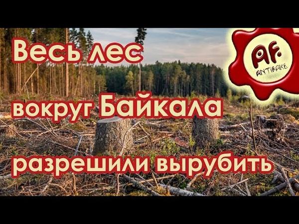 5 30 Антифейк Весь лес вокруг Байкала разрешили вырубить