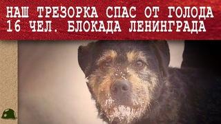 Как обычная собака Трезор в блокаду спасла 16 человек от смерти! Блокада Ленинграда. Война.