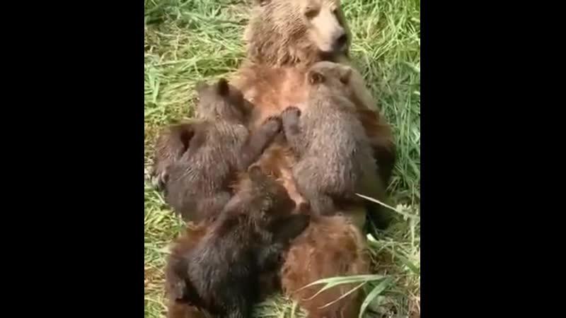 💗 МАМЫ разные нужны мамы всякие важны