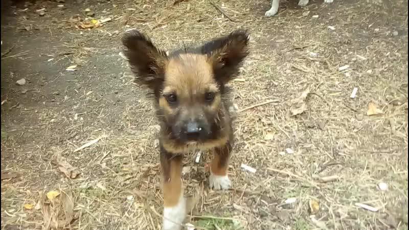 Беззащитные щенки ищут добрых хозяев